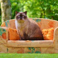 The Tale of Lieutenant Cat Lady